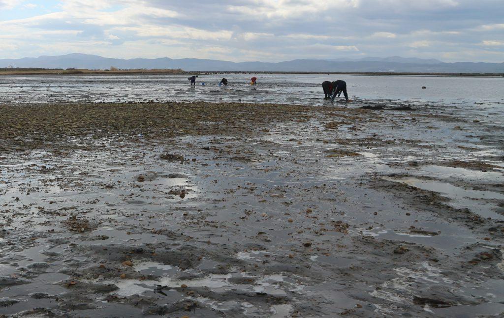 能取湖で潮干狩りしている画像