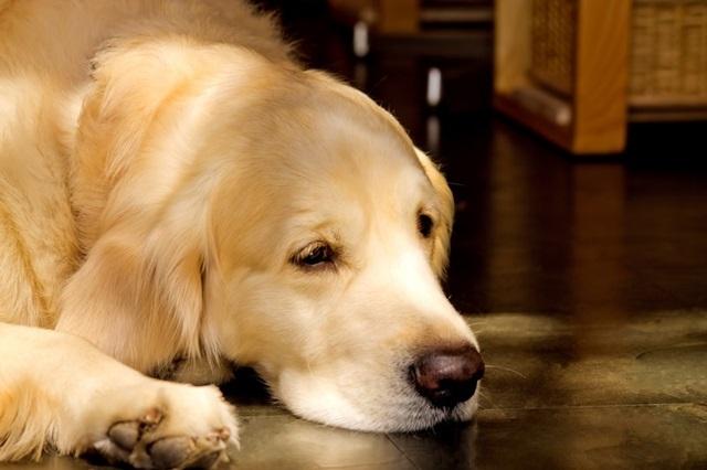 大切なペットの死は、ペットロスを起こす