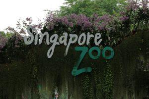 シンガポール動物園の入場券はどのチケットを買うのが一番安いのか