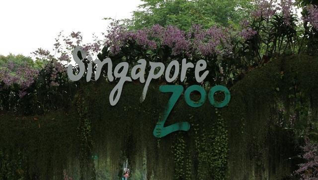 どこにいけばいいか迷うシンガポール動物園